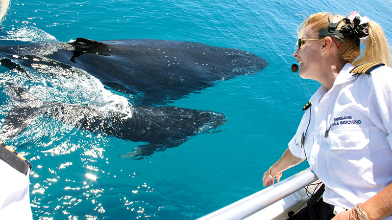 HAVE A WHALE OF A TIME ON MORETON BAY
