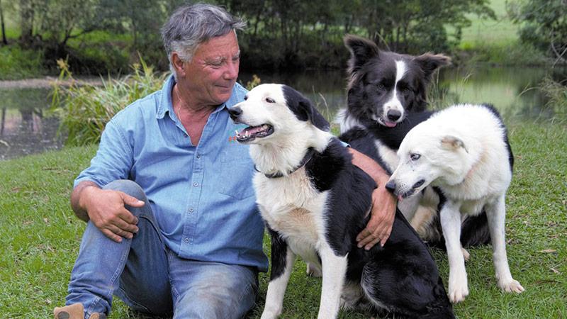 Sheep Herding For City Dogs